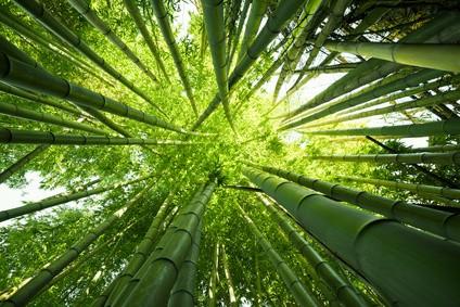 Ubranka dla niemowląt z bambusa